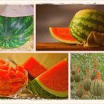 Как сохранить арбуз в домашних условиях