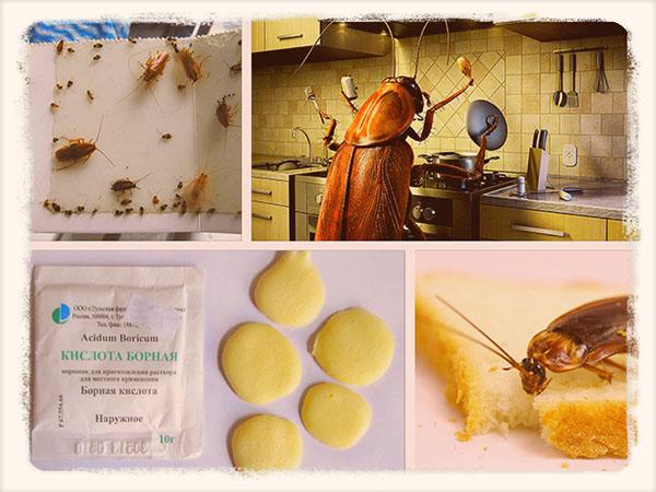 как избавиться от тараканов в квартире в домашних условиях
