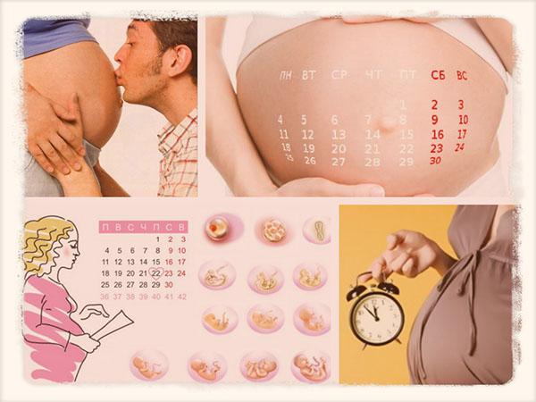 Акушерский календарь беременности по неделям 3 триместр