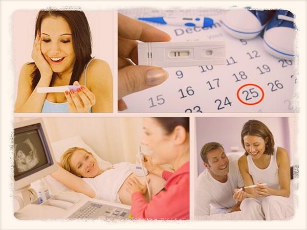 Календарь беременности по неделям развитие плода таблица