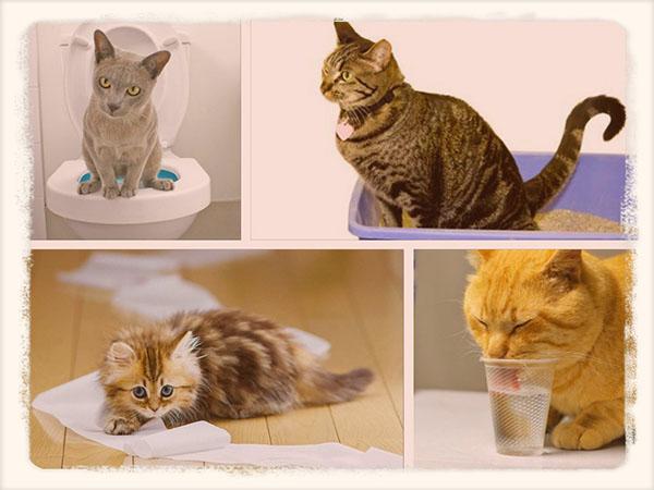 понос у кота чем лечить в домашних условиях
