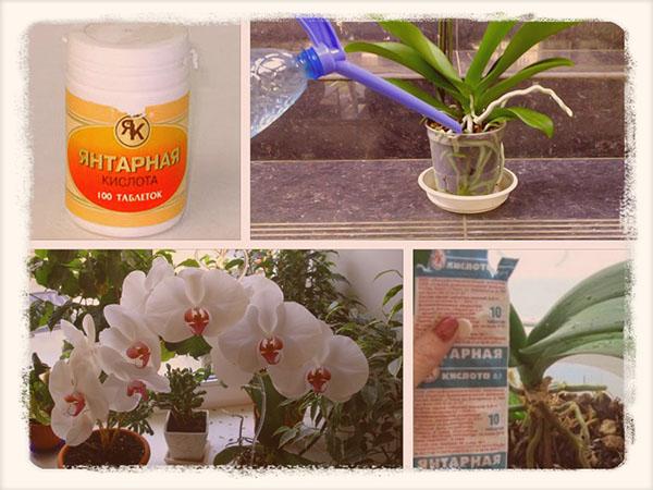 янтарная кислота для орхидей