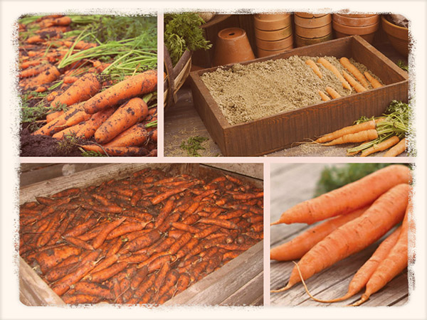 как хранить морковь в погребе зимой