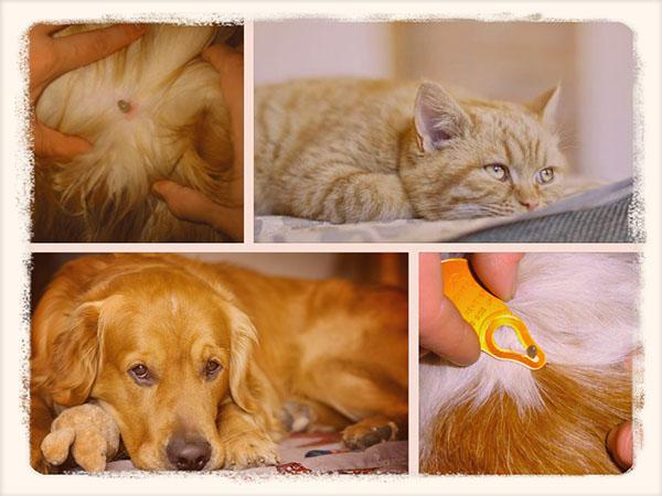 собаки и кошки с клещами