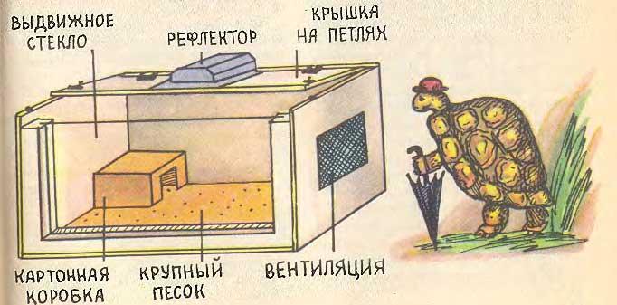 домик для черепахи