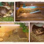 Как сделать террариум для сухопутной черепахи