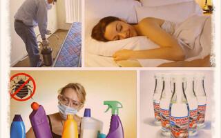 Как бороться с клопами в домашних условиях