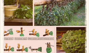Как заготовить березовые веники для бани