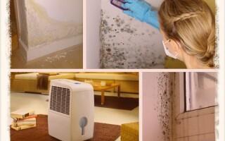 Как эффективно избавиться от сырости в доме