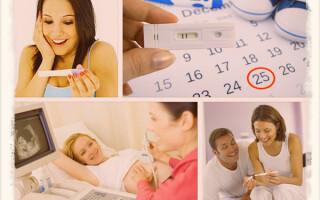 Календарь беременности по неделям: 1 триместр