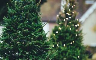 Как сохранить новогоднюю елку как можно дольше