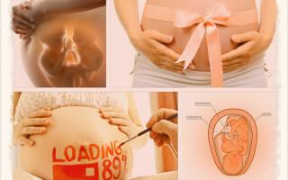 Сколько дней длится беременность у человека