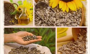 Польза и вред семечек