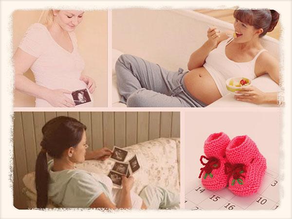 Акушерский календарь беременности по неделям