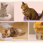 Чем лечить понос у кота