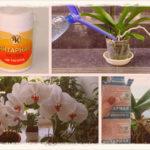 Как применять янтарную кислоту для орхидей