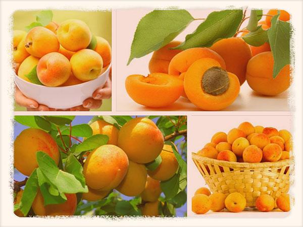 абрикосы польза и вред
