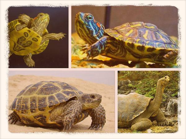 разнообразие черепах