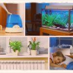 Как повысить влажность в квартире