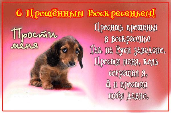 щенок прощеное воскресенье