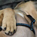 Как подстричь собаке ногти в домашних условиях