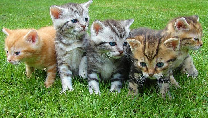 котята на лужайке